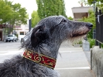 Kells Hounds Red Gold 2 inch Collar