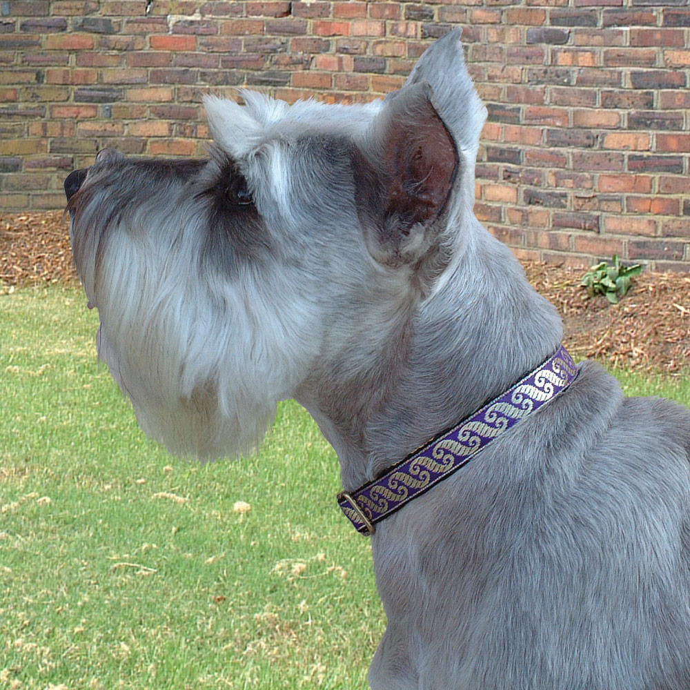 Cosmopolitan Purple 5/8 inch Collar