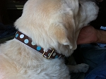 Hippodrome Brown and Blue 1 inch Collar