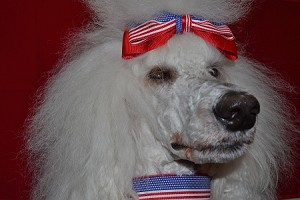 "They are proud to be an American Too! Let your dog show its patriotic pride with a Mrs. Bones American Flag collar in 1.5"", By The Way - Always Mrs. Bones Dog Collars are made in the USA!.AvailableIn 5/8"", 3/4"", 1"" and 1.5"" widths."