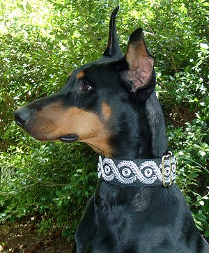 Caesar is very popular with my customers, ornate and traditional, this Ionic pattern is embroidered on a taffeta background. Classic and durable this Masterpiece Dog Collar in Gold with Irredescent background.