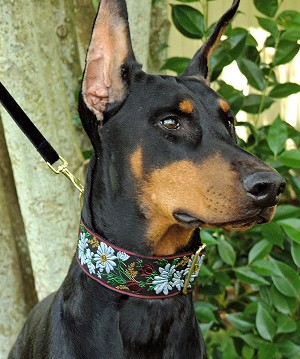 Stop and smell the Daisies! It's hard to look Couture when your a dog like a Mastif or Newfoundland, but Your dog will achieve Couture Elegance in a Daisy Garland Dog Collar from Mrs. Bones including poppies, wheat and greenery in Black or Garnet, Navy backgrounds.