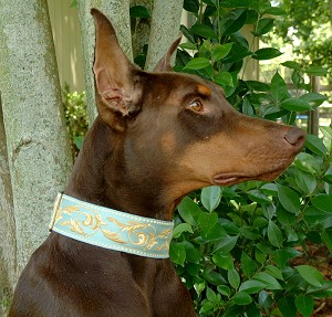Ganador Spanish for Winner, every dog that wears this dog collar will look like a Winner! Camel Baroque motifs on a Aqua Blue background
