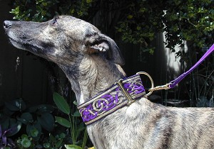 The Lavish Kells Hounds Collar is a Celtic design that appears in the Book of Kells, a beautiful manuscript written by monks in the early Middle Ages, containing the four gospels. The intertwined hound design is believed to represent honor and possibly re-incarnation.  Also available in Red/Gold, Royal Blue/Gold, Green/Gold, and Slate Blue/Gold. Also in Purple and Silver.  Available in 2-inch width.